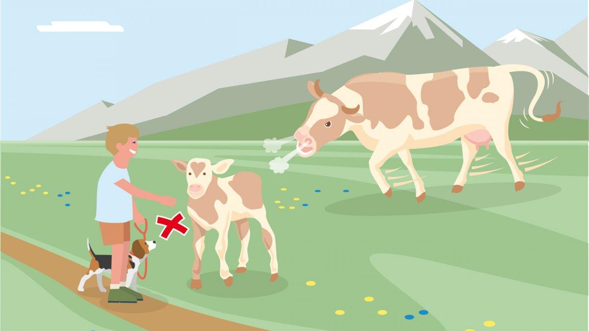 Adfærdstip nr. 3, © Landwirtschaftskammer Tirol