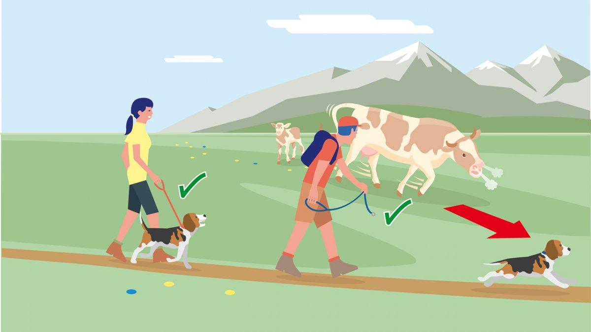Adfærdstip nr. 4, © Landwirtschaftskammer Tirol